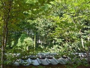 秋の竹林.jpg