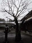 総持院のお庭.jpg