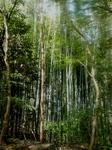 京都西山0406.jpg