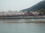嵐山0406�A.jpg