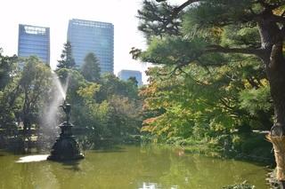 カワセミの池.jpg