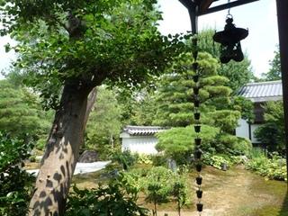 京都の木陰.jpg