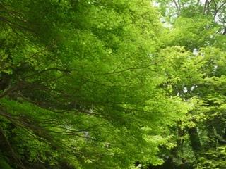 奥嵯峨野の青紅葉.jpg