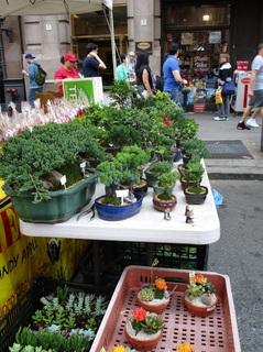 盆栽を売る.jpg