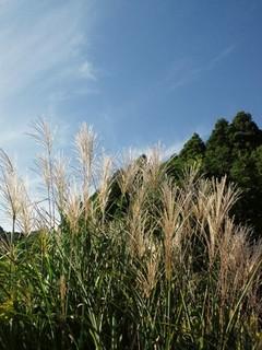 秋の空とススキ.jpg