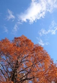 空3.jpg