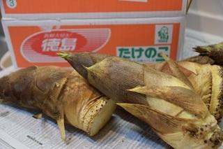 竹の子3.jpg
