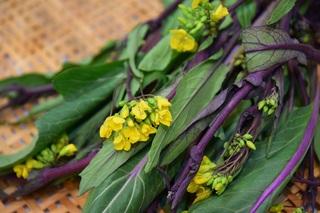 紅芯菜の花.jpg