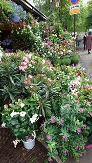 花や1.jpg