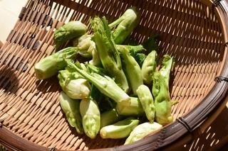 辛子菜の芽.jpg