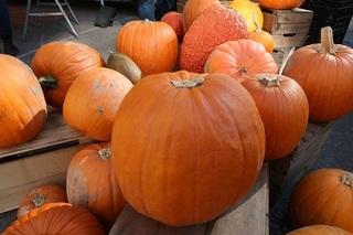 !かぼちゃ.jpg